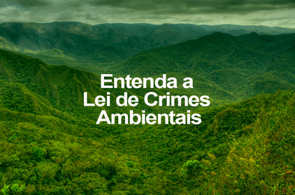 Entenda a Lei de Crimes Ambientais